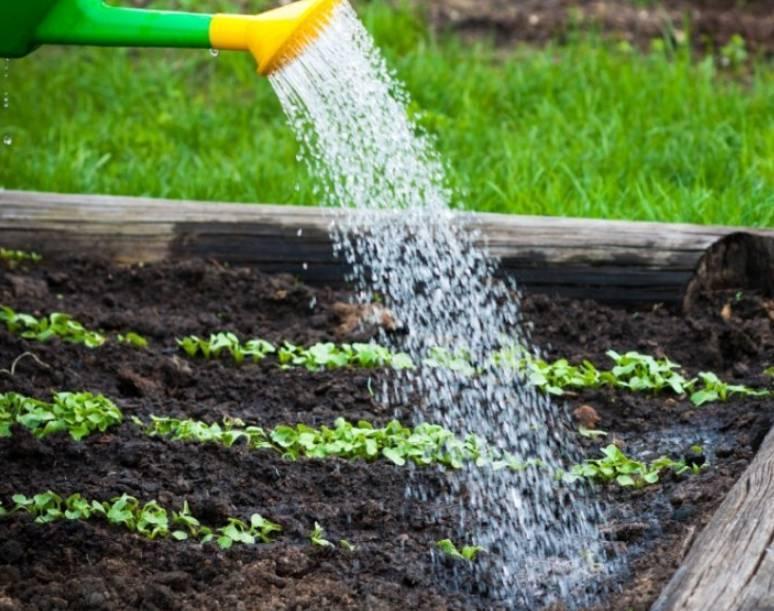 Меню для редиски: чем подкормить растение после всходов в теплице и в открытом грунте?