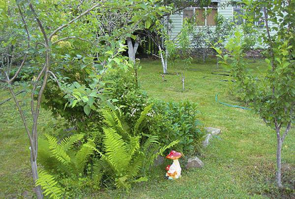 Опасное соседство для садовых культур