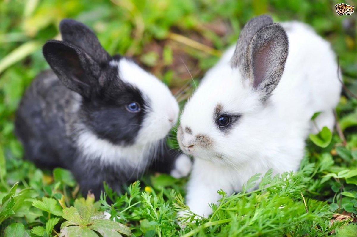 Чем кормят декоративных кроликов: что едят в домашних условиях, что можно давать