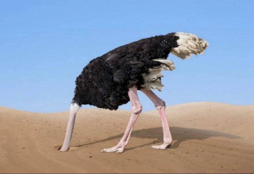 Почему страус прячет голову в песок? так ли это на самом деле? - общая информация - 2020