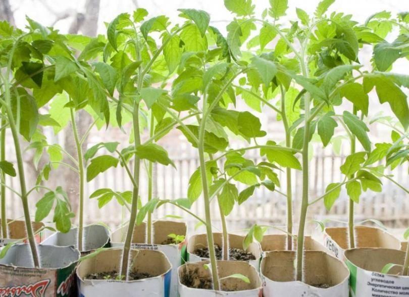 Янтарная кислота для помидор и огурцов: советы по применению
