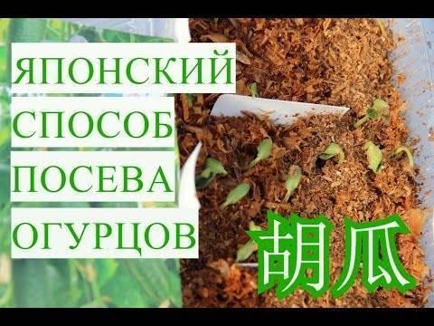 Как правильно посадить и вырастить рассаду огурцов в домашних условиях