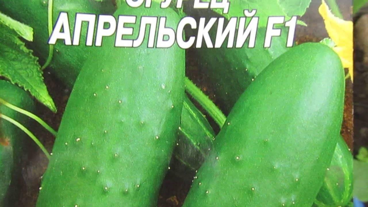 Об огурце Апрельском: описание и характеристики сорта, посадка и уход