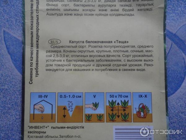 Описание капусты теща
