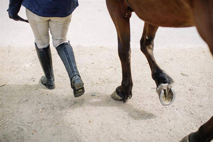 Копыто лошади – строение и предназначение 2020