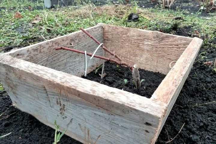 Укрывать виноград или нет, как правильно укрывать на зиму, как подготовить