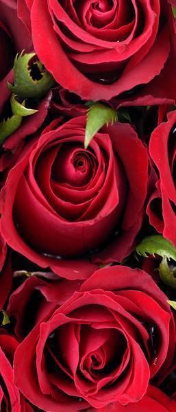 7 идеальных сортов роз для огненного цветника