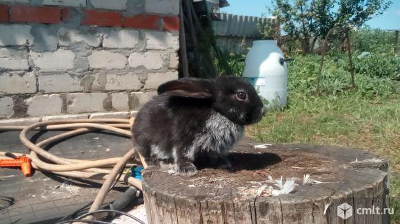 Названия самых популярных пород кроликов с фотографиями