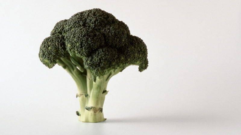 Брокколи, уход и выращивание в открытом грунте, как вырастить, когда срезать брокколи в открытом грунте?