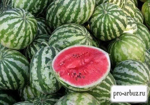 Арбуз астраханский: описание сорта, фото, выращивание, плюсы и минусы, отзывы