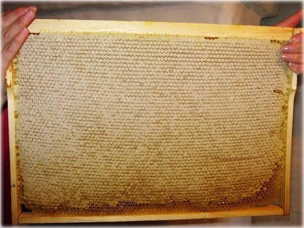 Жидкий мед, который не густеет — подделка или природный процесс?