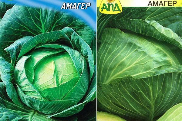 Капуста крюмон f1: описание белокочанного сорта и характеристика, фото семян, отзывы садоводов о выращивании рассады