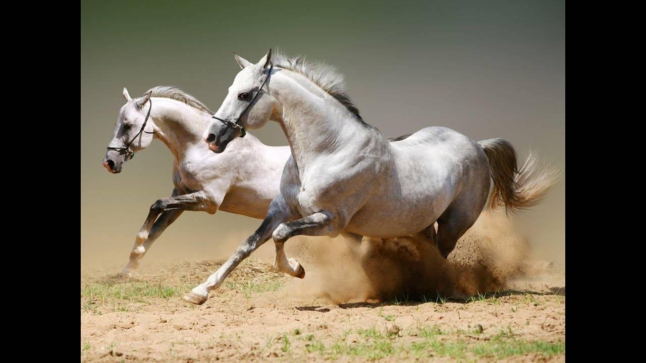 Список самых красивых лошадей