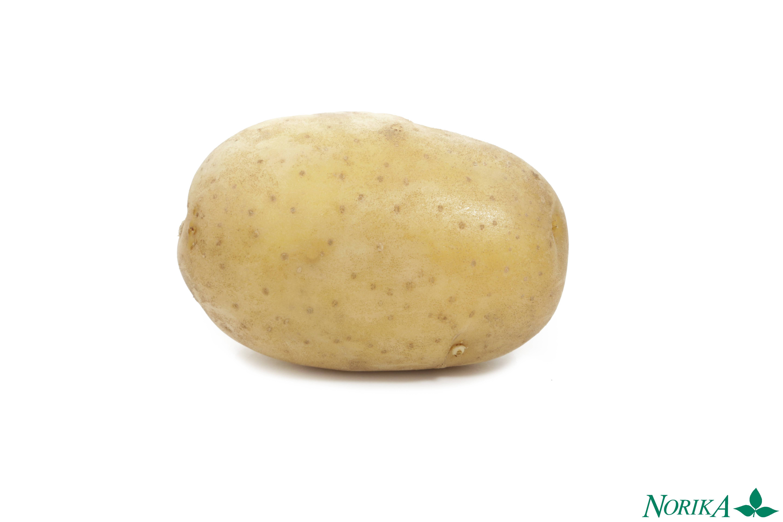 Сорт картофеля вега характеристика