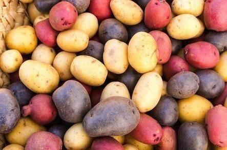 Сорта картофеля из голландии