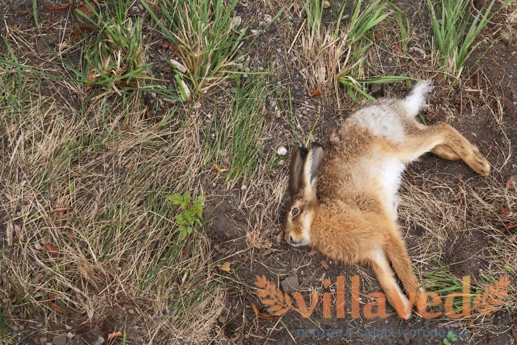 Дохнут кролики без видимых причин – что делать?