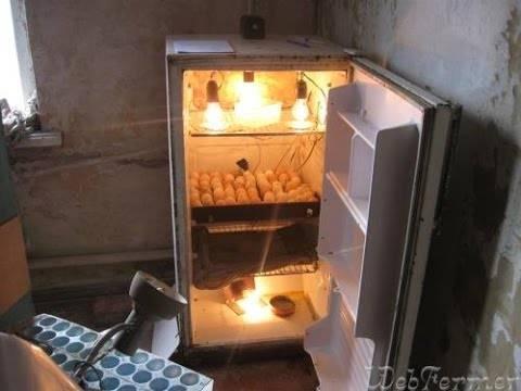 Инкубатор своими руками: как сделать для яиц из холодильника с терморегулятором, схемы, чертежи, фото и видео, изготовление для успешного птицеводства