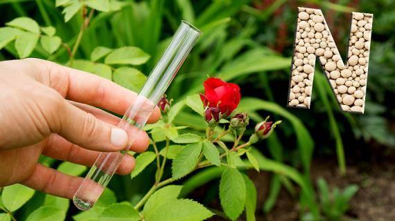 Чем подкормить сад весной, летом и осенью