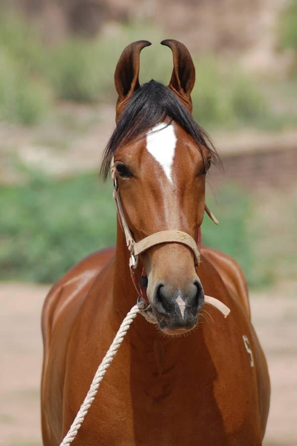 Какие породы входят в рейтинг самых красивых лошадей?