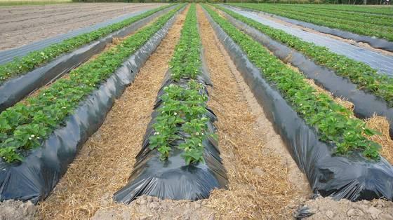 Покажите как картошку нагребают гребне