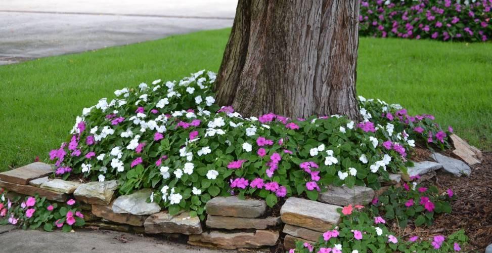 Простые варианты, какие цветы посадить под деревьями, чтобы приствольный круг плодовых деревьев выглядел на все 100! | садовый участок