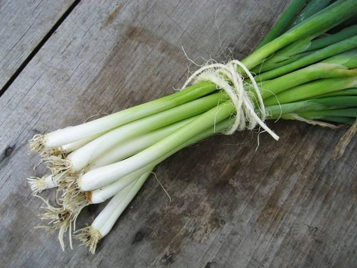 Лук-батун, выращивание из семян