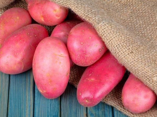 Урожай с шотландских гор — описание и характеристики сорта картофеля «повелитель просторов»