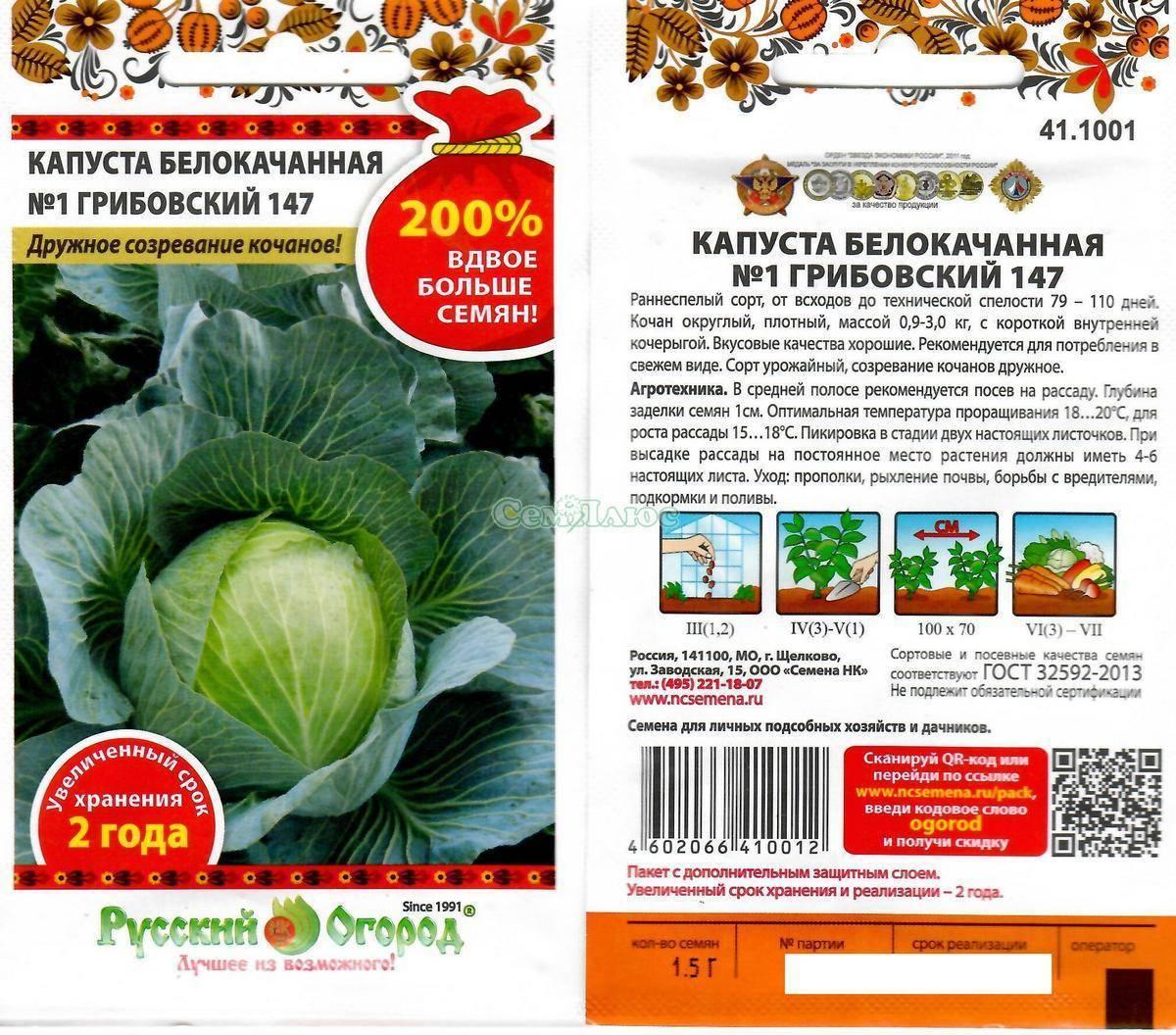 Капуста грибовская: как выращивать самый популярный сорт