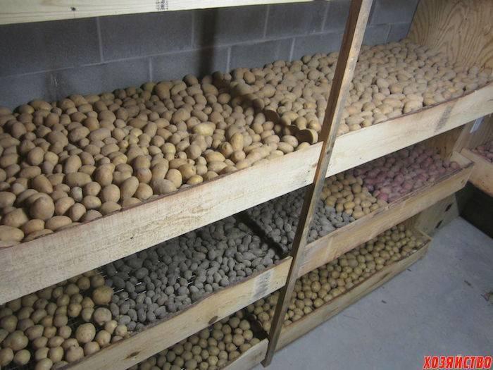 Секреты, как правильно хранить картошку на зиму в погребе и на балконе. | красивый дом и сад