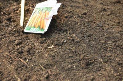 Как поливать морковь после посадки