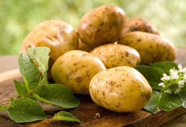 Картофель тулеевский: описание сорта, выращивание и уход