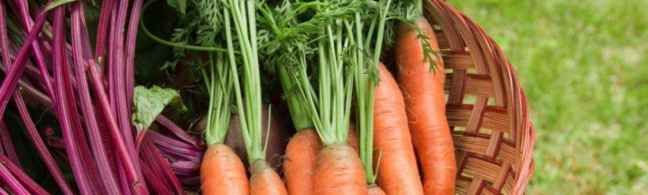 Чем удобрять морковь – на что влияют удобрения моркови