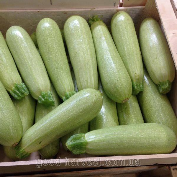 Сорта кабачков – как выбрать тот, что подойдет вам?