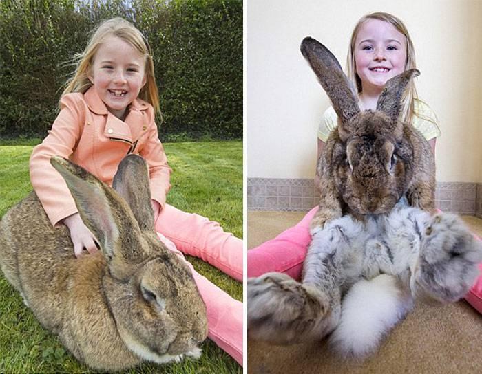 Крупные породы кроликов