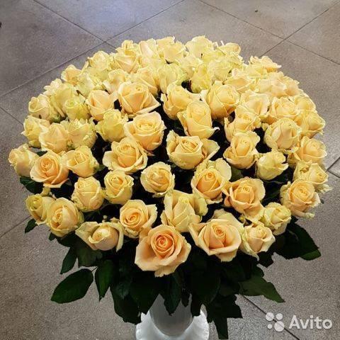 В чем особенность розы аваланж: выращивание, разновидности с фото