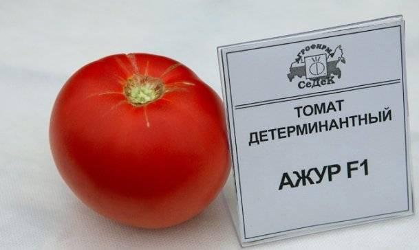 Скороспелый, вкусный и простой в уходе сорт томата «моя любовь f1»: описание, характеристика, посев на рассаду, подкормка, урожайность, фото, видео и самые распространенные болезни томатов