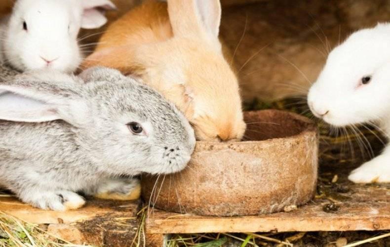 Чем нельзя кормить кроликов?
