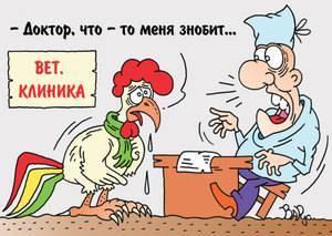 Птичий грипп у кур несушек и бройлеров — симптомы и лечение