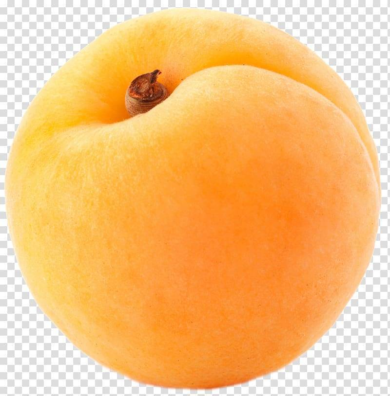 Описание гибридов абрикоса