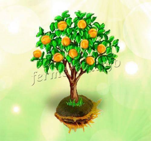 Абрикос из косточки: пробуем вырастить дерево сами