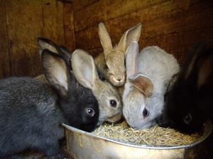 Соль лизунец для кроликов