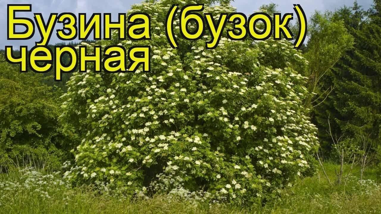8 кустарников, которые преобразят ваш сад за самое короткое время