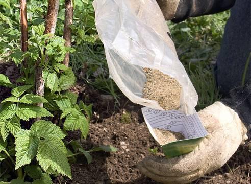 Удобрение малины: подкормка весной и осенью, посадка