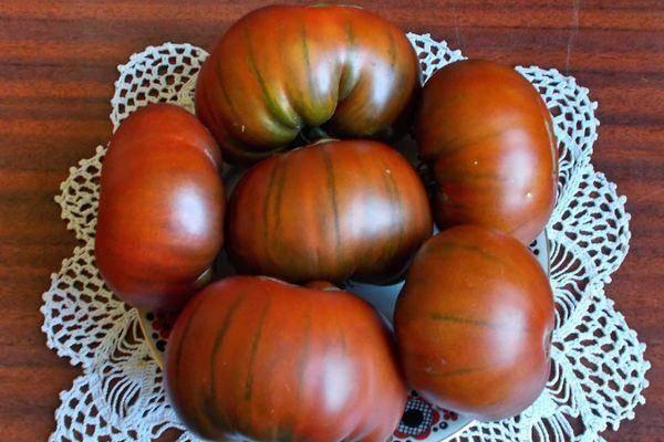 Сорт томата «арбузный»: описание, характеристика, посев на рассаду, подкормка, урожайность, фото, видео и самые распространенные болезни томатов