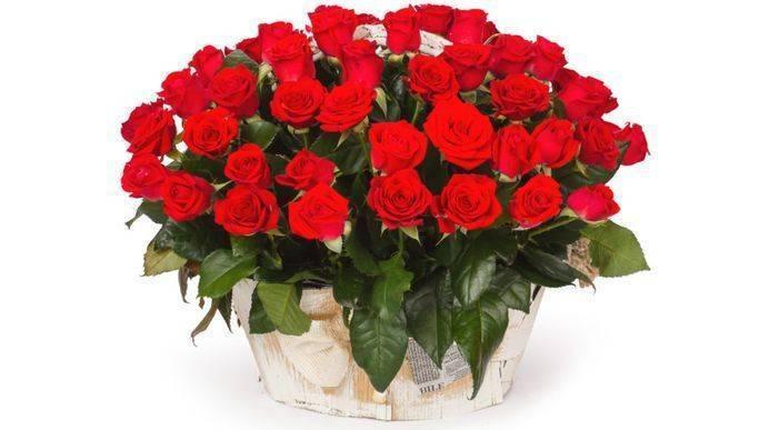 Роза кордана микс — уход в домашних условиях