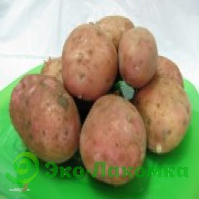"""Картофель """"мелодия"""": описание сорта и фото, характеристики корнеплода, а так же агротехника"""