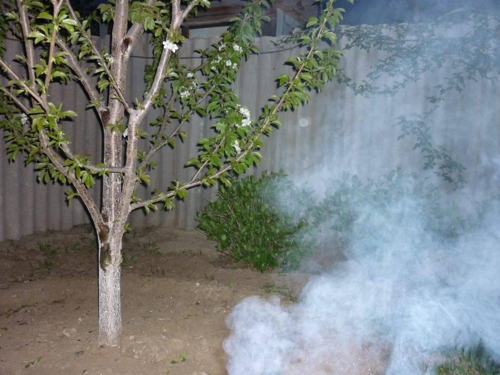Подкормка абрикоса весной. чем подкормить плодоносящую сливу и абрикос, чтобы плоды были крупнее