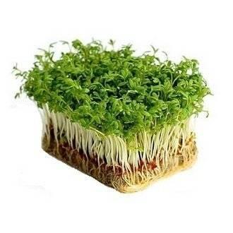 Кресс-салат на подоконнике: легко и просто