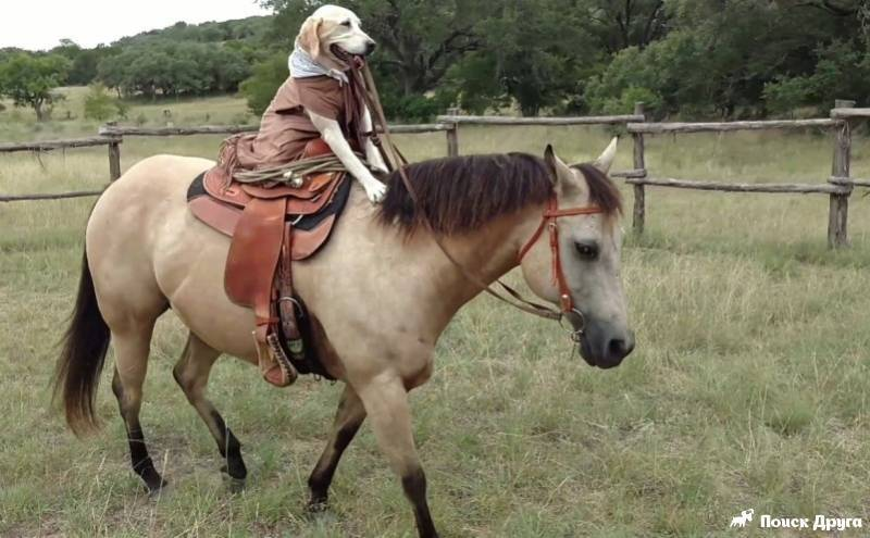 Как управлять лошадью – средства и методы 2020