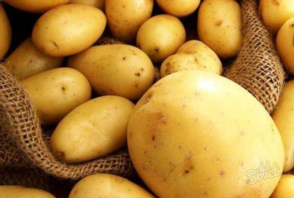 """Описание урожайного картофель """"таисия"""", подробная характеристика, фото"""
